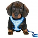 Trixie Puppy Soft Harness